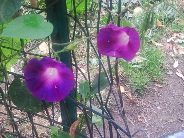 Flowers in Bedstuy Brooklyn